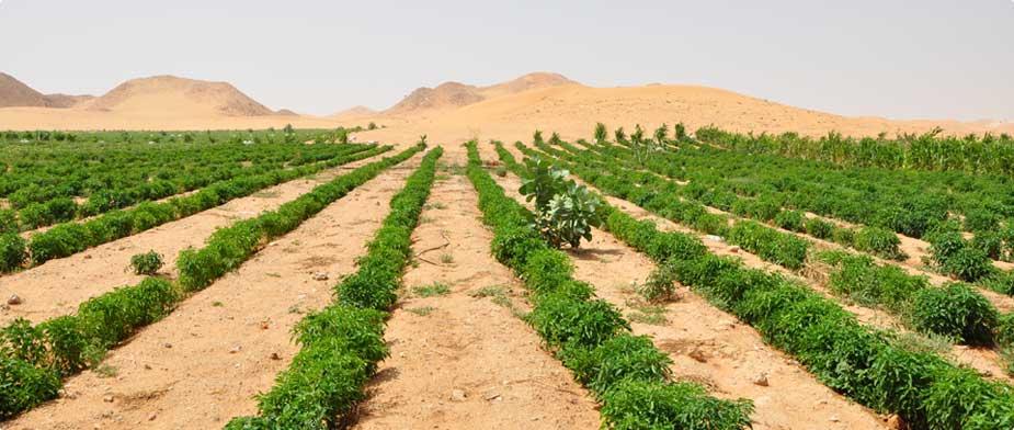 China Is Farming In The Desert - Desert farming saves